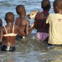 Unsere Tiere und die Kids